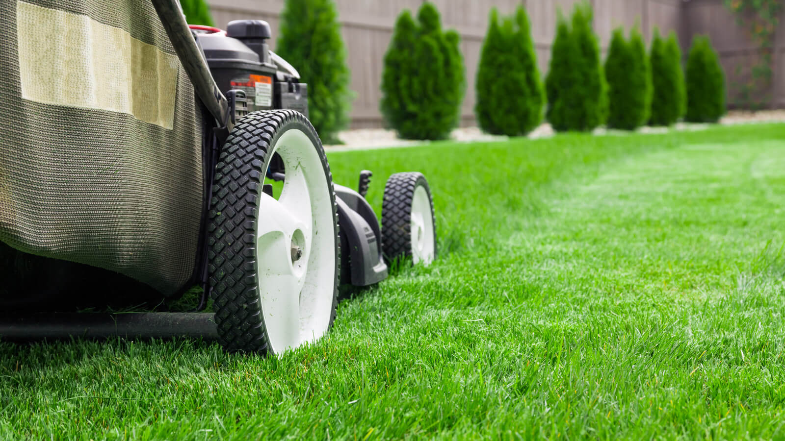 how to have a nice lawn